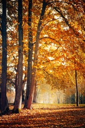 Beautiful Nature Autumn landscape. Scenery view on autumn city park with golden yellow foliage in Sunny day. Walking path in the city Park strewn with autumn fallen leaves. Vertical image