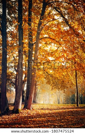 Beautiful Nature Autumn landscape. Scenery view on autumn city park with golden yellow foliage in Sunny day. Walking path in the city Park strewn with autumn fallen leaves. Vertical image Stock photo ©