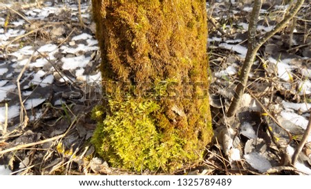 Beautiful nature backdrop. Moss backdrop. Tree background #1325789489