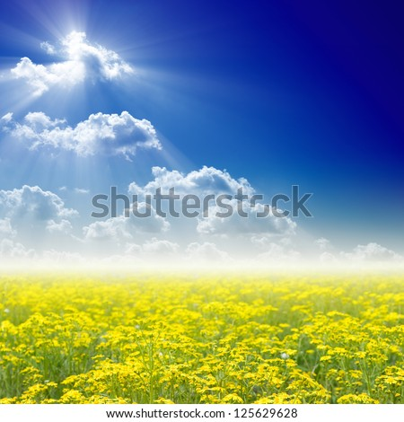 Beautiful nature background - blooming wildflowers field, bright sun in blue sky.