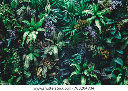 Beautiful nature background of vertical garden with tropical green leaf #783204934