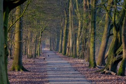 Beautiful nature background with pathway through the wood in winter, A row of bare trees along both side of walkways and orange dried leaves, Amsterdamse Bos (Forest) Amsterdam, Netherlands.