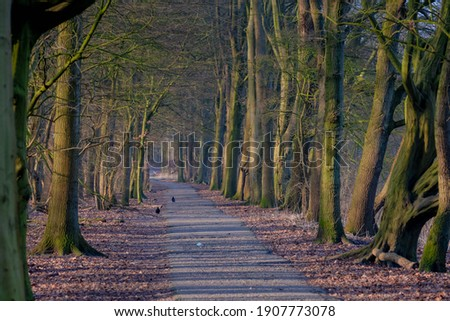 Beautiful nature background with pathway through the wood in winter, Rows of bare trees along both side of walkways and orange dried leaves, Amsterdamse Bos (Forest) Amsterdam, Netherlands. Stockfoto ©