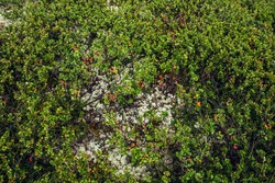 Beautiful nature background with wild flora of highlands close-up. Natural backdrop with green rich vegetation of mountains closeup. Full frame of scenic alpine lush greenery. Nature texture of plants