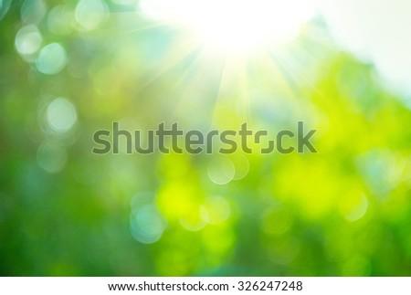 beautiful nature blurred...