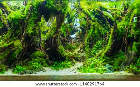 Beautiful nature decoration planted fish tank in freshwater aquarium