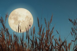 Beautiful nature fantasy - wild grass and full moon with star. Retro style with vintage color tone. Fall season, halloween and thanksgiving in night skies. autumn background concept.