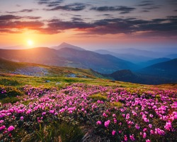 Beautiful nature landscape, amazing mountain view. Magic rhododendron blossoms in the springtime. Location Carpathian, Ukraine. Wild area. Scenic image of hiking concept. Explore the beauty of earth.