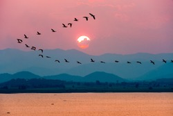 Beautiful nature landscape birds flock flying in a row over lake water red sun on the colorful sky during sunset over the mountains for background at Krasiao Dam, Suphan Buri in Thailand