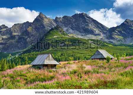 Beautiful nature landscape Gasienicowa Valley High Tatra Mountains national park Carpathians Poland spring summer blue sky clouds green trees countryside grass field flowers Foto stock ©