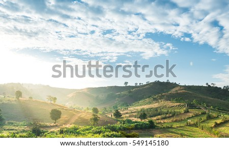 beautiful nature landscape with sunset at the mountain and green tree.