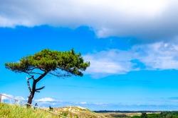 Beautiful nature of Frisian Island Terschelling, The Netherlands, Europe.