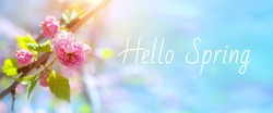 Beautiful nature scene with almond tree branch in bloom and blue sky in early spring. Delicate pink flower head in sunlight, close-up. Springtime blossom flowers banner with words Hello Spring.