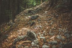 beautiful nature scenery landscape of empty lonely trail in deep autumn forest with stones and falling leaves