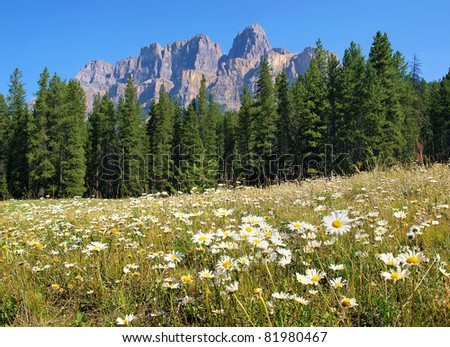 Beautiful nature scenery with field of flowers and Rocky Mountains in ...