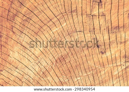Beautiful nature texture of tree stump  use as natural background backdrop and free form copy space