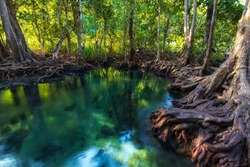 Beautiful nature the jungle turquoise green river in mangrove forest of Tha Pom Khlong Song Nam in Krabi Province southern Thailand, roots of mangrove trees