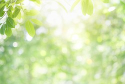 Beautiful nature view of green leaf on blurred greenery background in garden and sunlight with copy space using as background natural green plants landscape, ecology, fresh wallpaper concept.