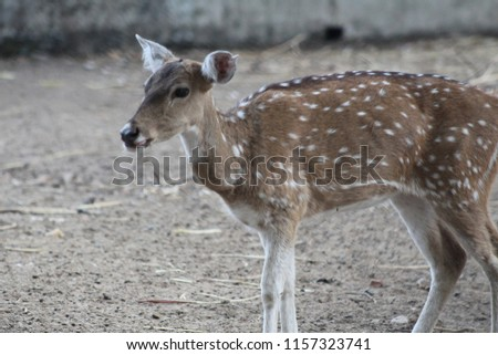 beautiful nature wild life animal deer #1157323741