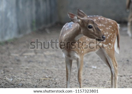 beautiful nature wild life animal deer #1157323801