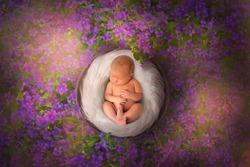 Beautiful newborn in wood basket sleep on violet flowers glade