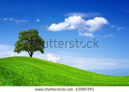 Beautiful oak tree on green field #63089395