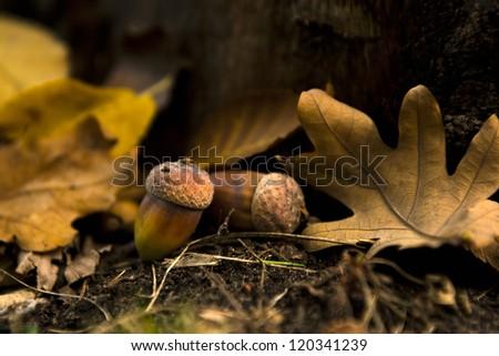 Beautiful oaks under a huge oak tree.Check my portfolio for more beautiful nature photographs.