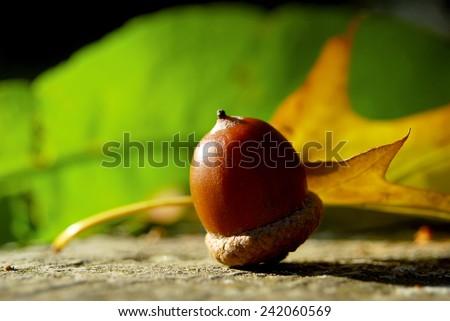 Beautiful oaks under a huge oak tree.Check my portfolio for more beautiful nature photographs. #242060569