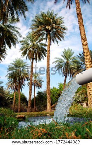 beautiful oasis palm with natural water spring Foto stock ©