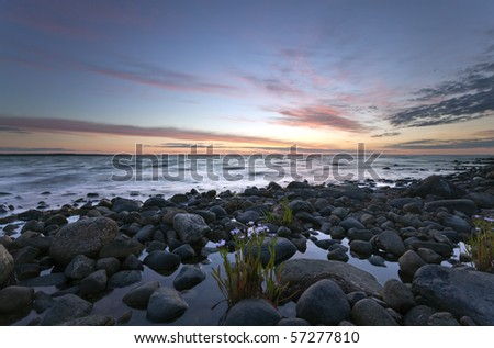 Beautiful ocean view with windblown flowers in the foreground.