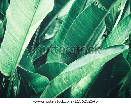 Beautiful of green tropical leaves #1136232545