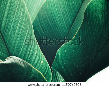 Beautiful of green tropical leaves #1150760306