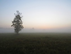 Beautiful One Isolated Single Tree in Nature Wild Landscape Sunrise with a Foggy Mist