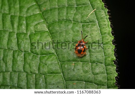 beautiful orange and black bug in forest  #1167088363