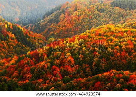 Beautiful orange and red autumn forest. Autumn forest, many trees in the orange hills, orange oak, yellow birch, green spruce, Bohemian Switzerland National Park, Czech Republic. Hilly autumn forest.