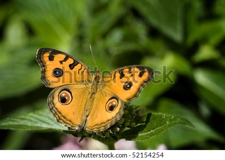 Beautiful orange butterfly collecting pollen on flower in sunlight