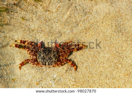 Beautiful orange colored crab resting on sand. Photo with copy space.