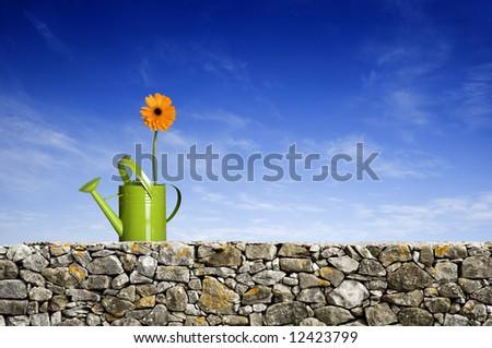 Beautiful orange gerbera flower on green watering can - stock photo
