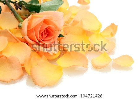 beautiful orange rose petals and rose isolated on white - stock photo