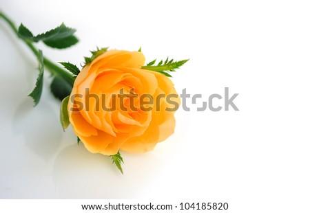 Beautiful orange roses background