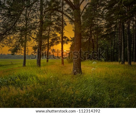 beautiful orange sunset, view from pine forest