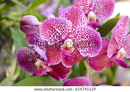 Beautiful orchid flower and green leaves background in the garden .Orchids close up #654745129