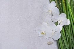 beautiful orchid flower and stone with long green leaves isolated on gray background.