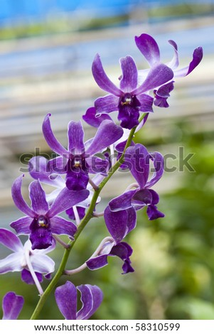 Beautiful orchid flower over blur background