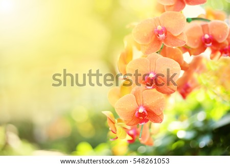 Beautiful orchid flower with natural background. #548261053
