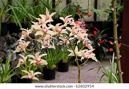 beautiful orchid flowers blooming in vivid color