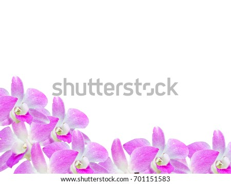 Free photos Light pink orchid flower frame isolated on white ...