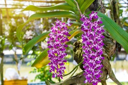 Beautiful orchid flowers in a blurry background White and pink orchid flower in nature ,fresh ,nature ,amazing orchids in tropical garden in nature for background usage Queen of flower soft focus