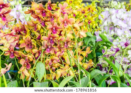 Beautiful orchid flowers in the flowers shop