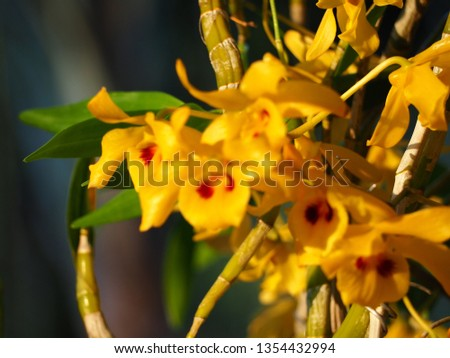 Beautiful orchid photos #1354432994